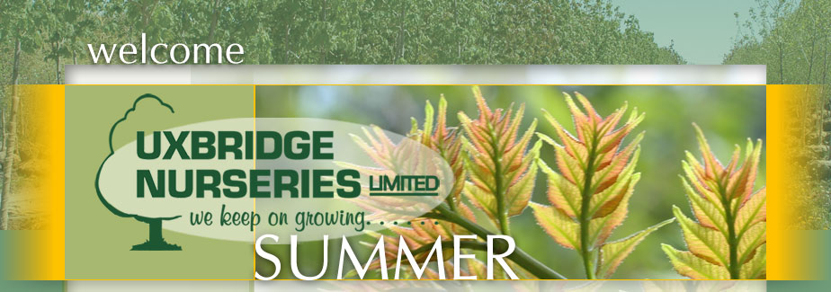 Uxbridge Nurseries | Wholesale Trees Shrubs Evergreens Perennials Ground-Covers Vines Grasses